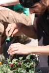 Planting a basket 30-05-09